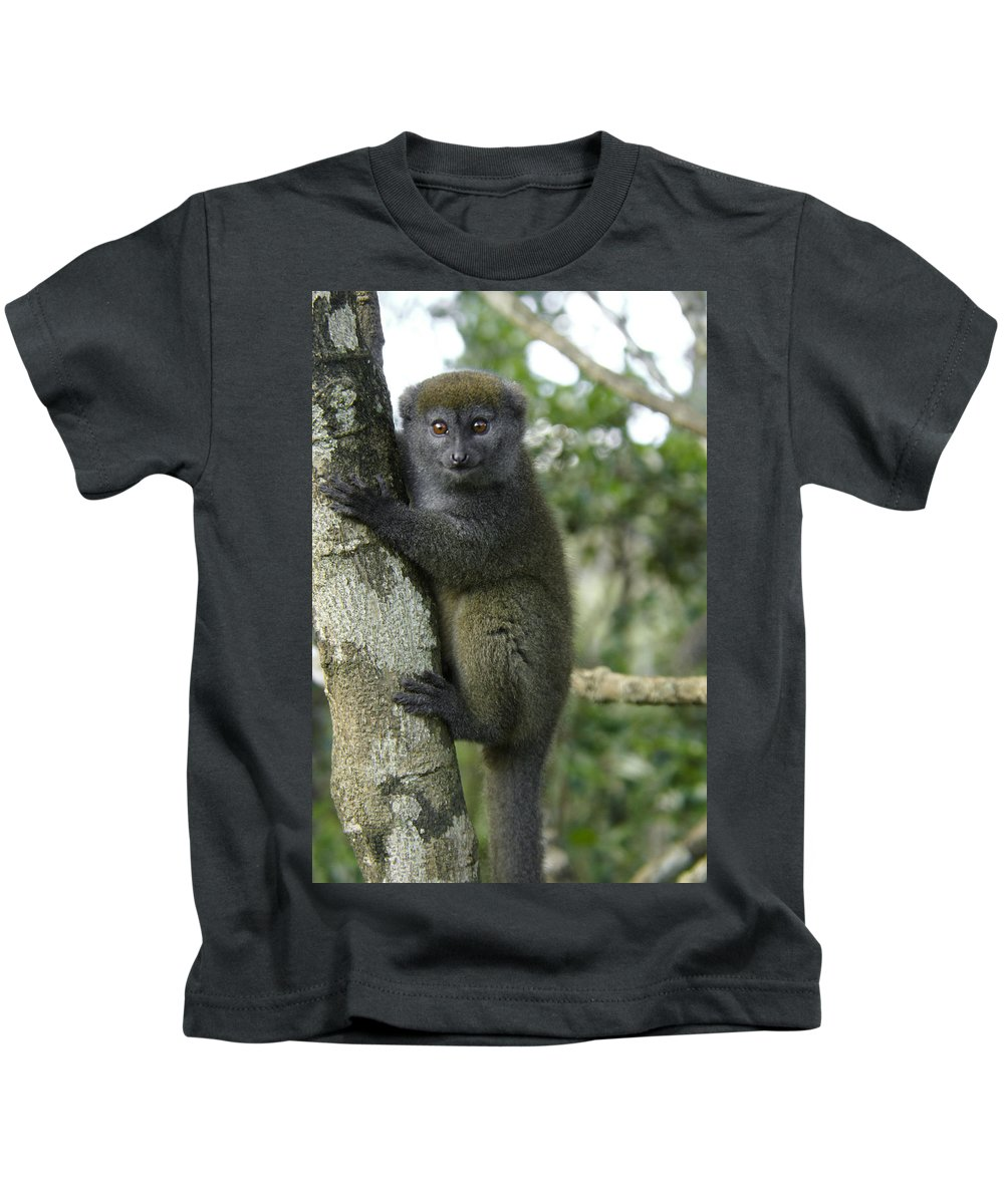 Madagascar Kids T-Shirt featuring the photograph Gray Bamboo Lemur by Michele Burgess
