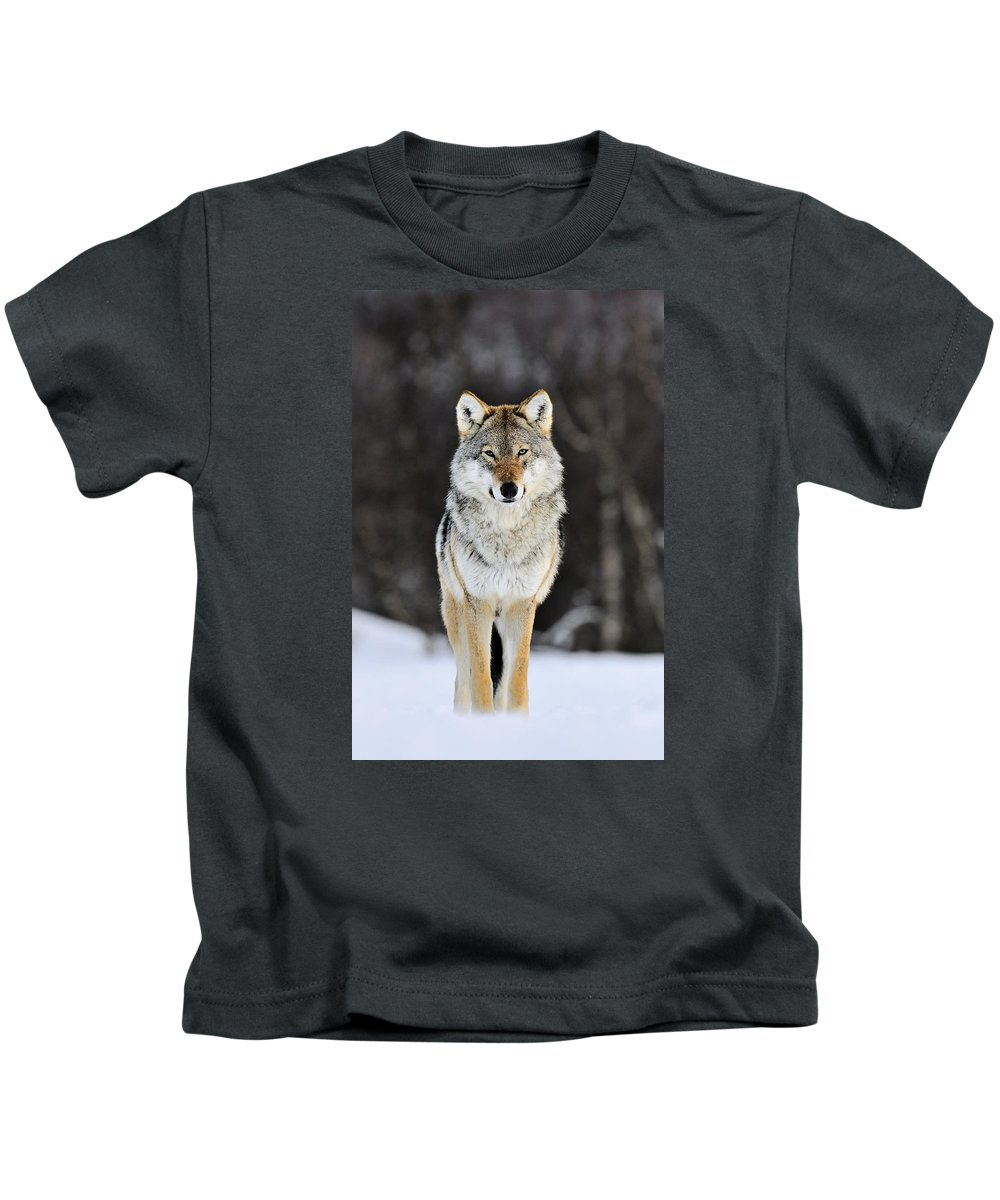 Mp Kids T-Shirt featuring the photograph Gray Wolf in the Snow by Jasper Doest