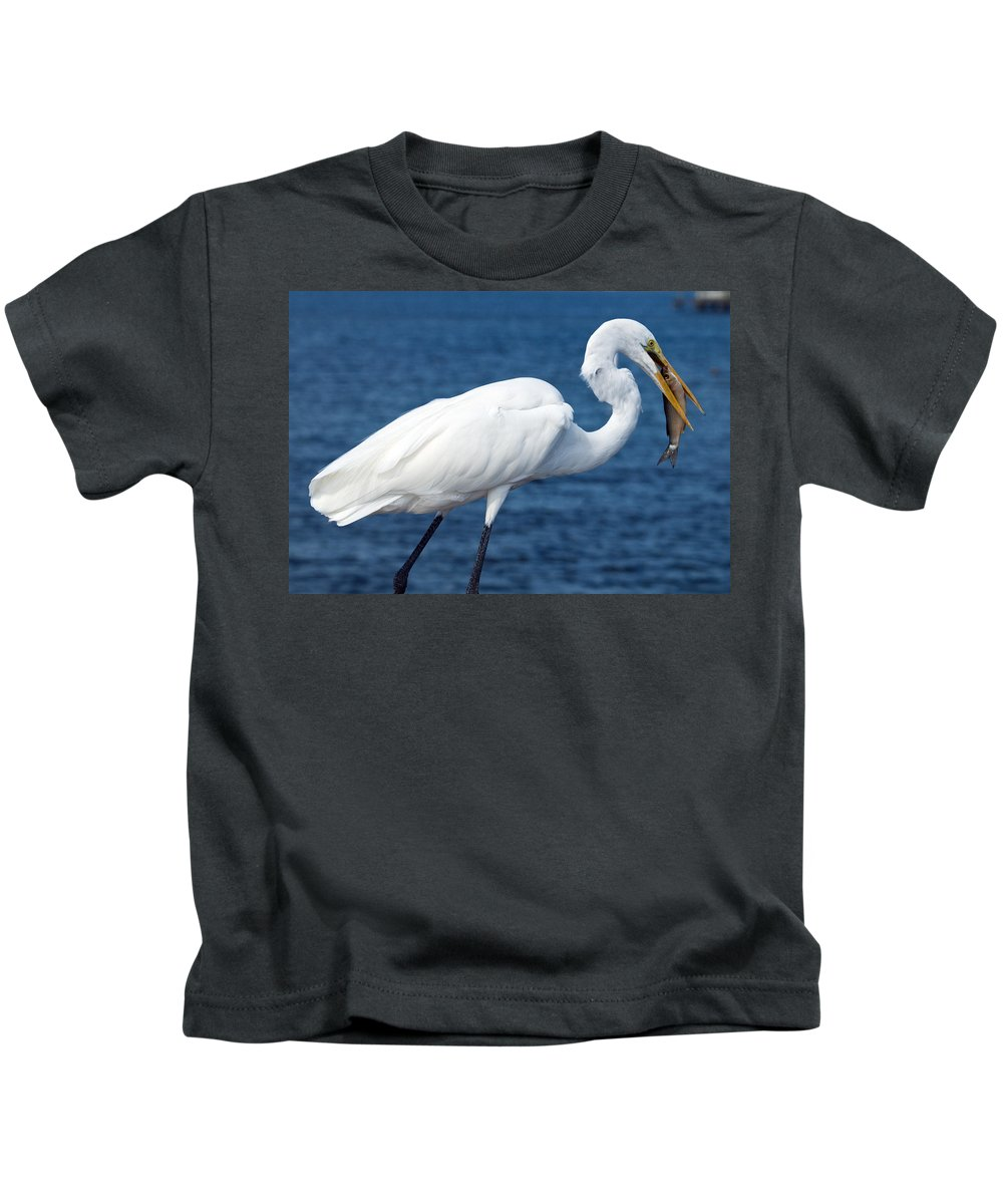 Great; Egret; Ardea; Alba; Eating; Eat; Fish; Redfish; Red; Bird; Seabird; Ocean; Indian; River; Lag Kids T-Shirt featuring the photograph Great Egret In Florida by Allan Hughes
