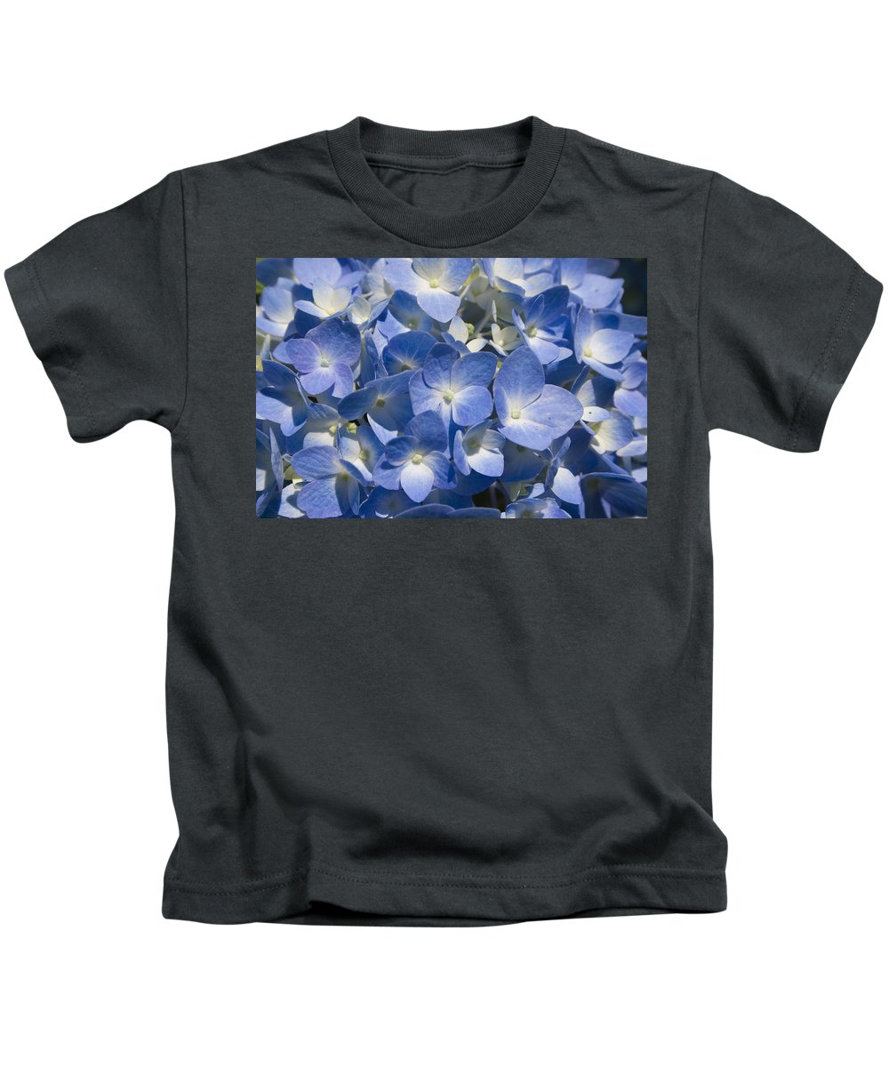 Flower Bloom Blue White Close Nature Sunny Summer Hydrangea Kids T-Shirt featuring the photograph Hydrangea by Andrei Shliakhau