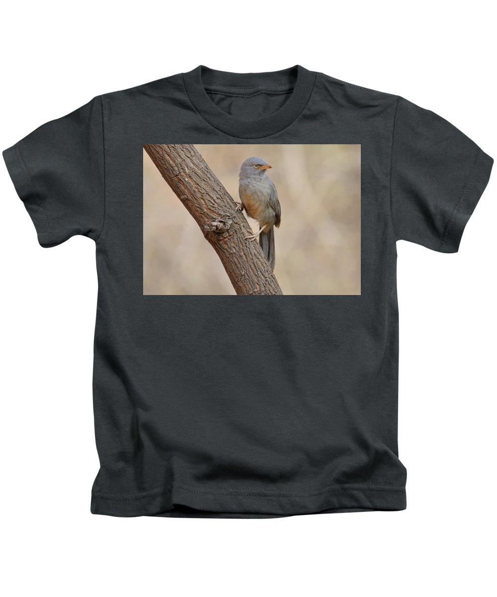 Bird Kids T-Shirt featuring the photograph Jungle Babbler by Manjot Singh Sachdeva