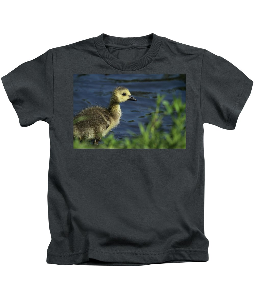 Geese Kids T-Shirt featuring the photograph Just A Babe by Karol Livote