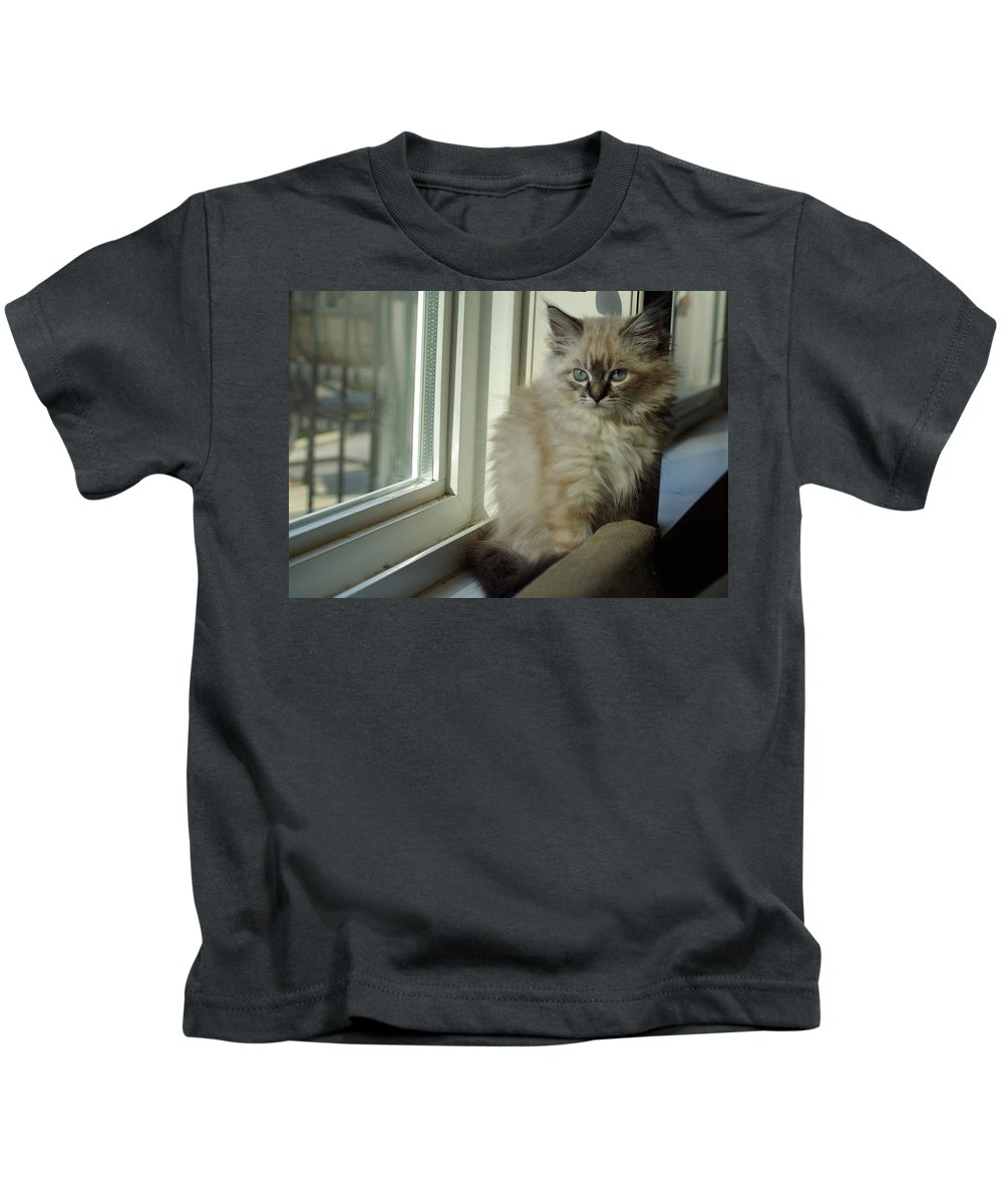 Kitten Kids T-Shirt featuring the photograph Kitten Daydreams by Cindy Johnston