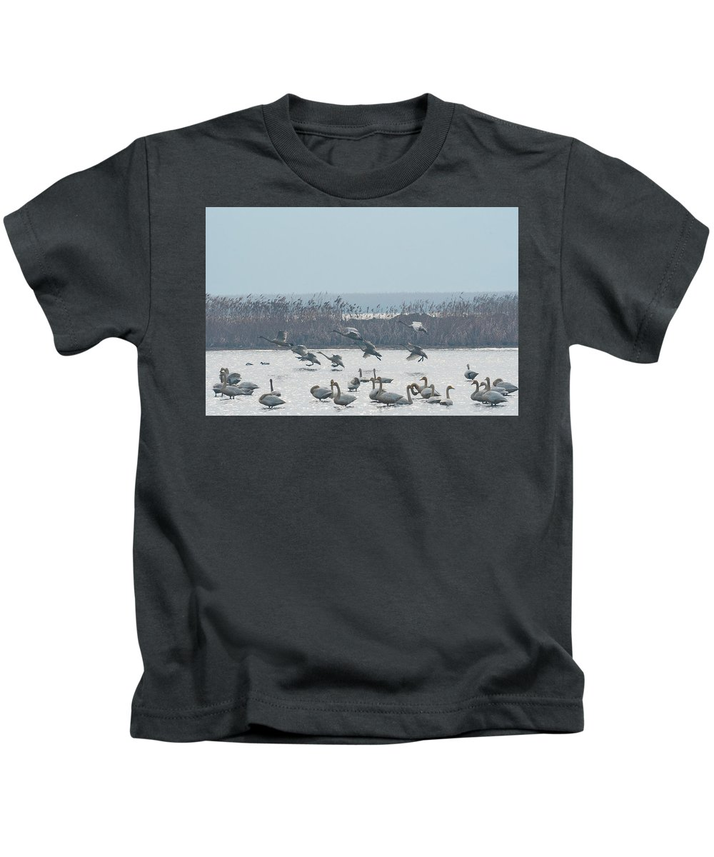 Whooping Swans Kids T-Shirt featuring the photograph Landing by Eric Nelson