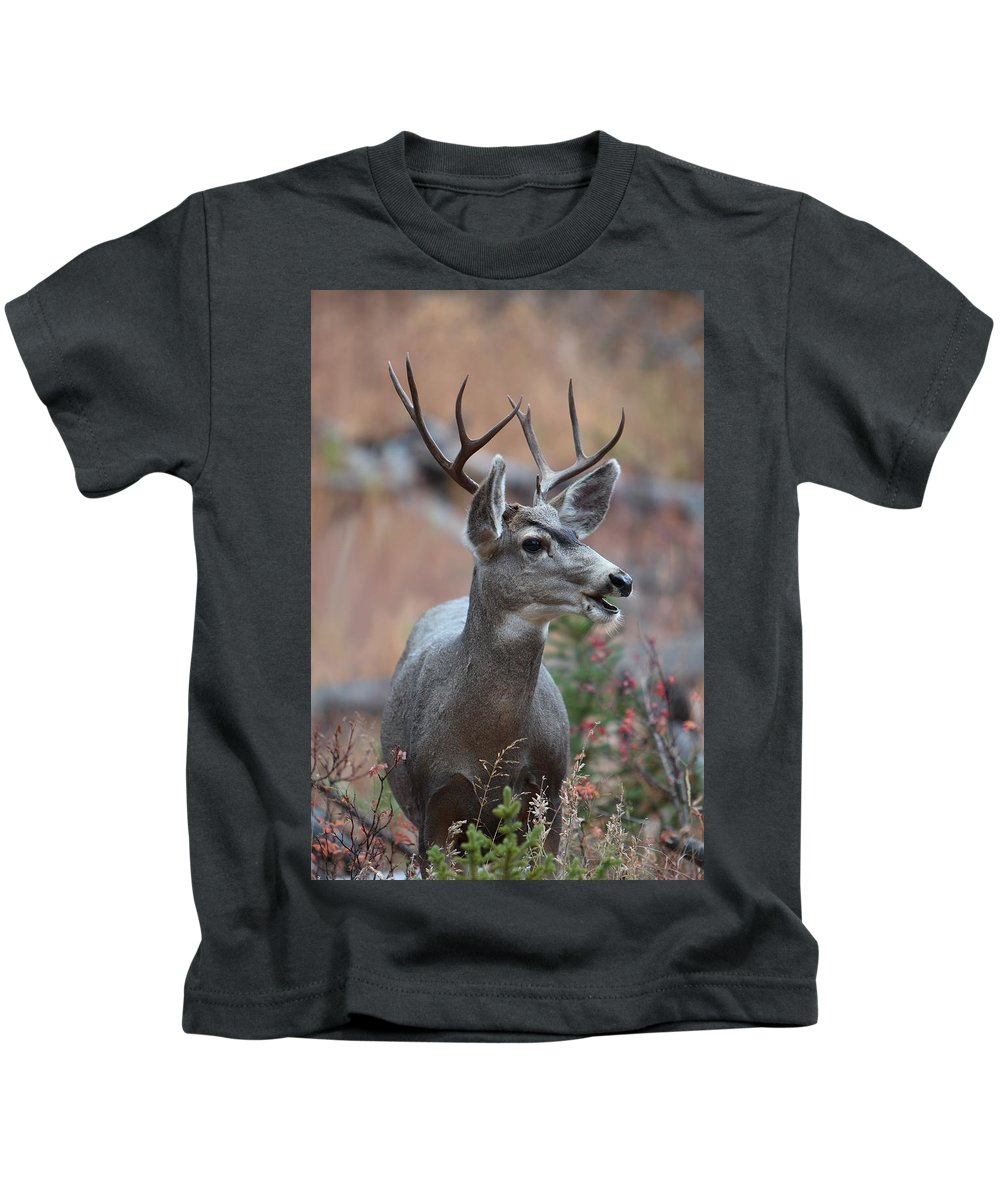 Quadruped Kids T-Shirt featuring the photograph Lil' Fourpoint by David Andersen