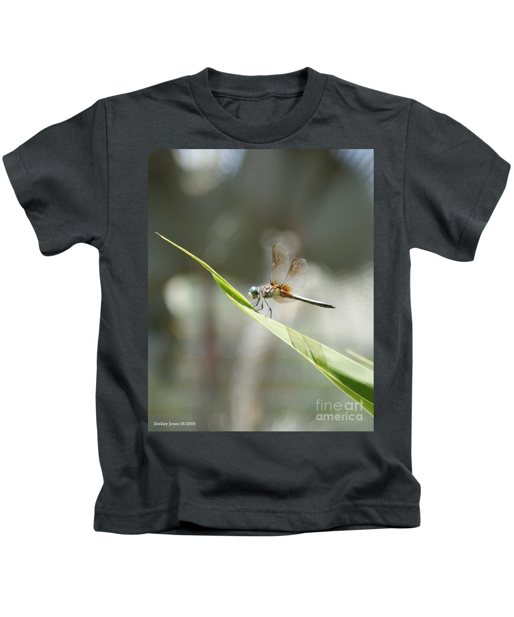 Dragonfly Kids T-Shirt featuring the photograph Little Dragon by Shelley Jones