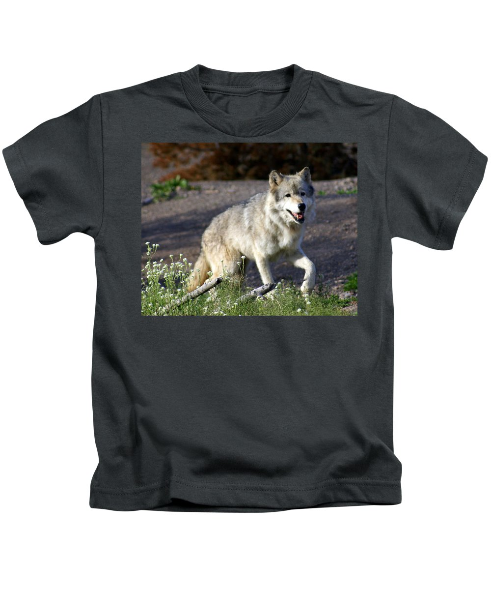 Wildlife Kids T-Shirt featuring the photograph Lonly Wolf by Marty Koch