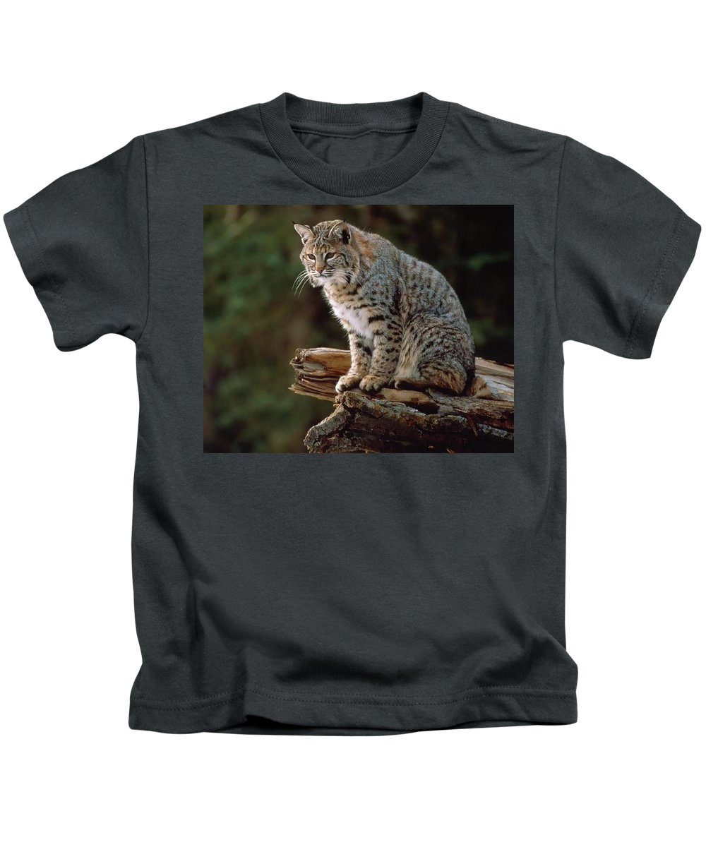 Lynx Kids T-Shirt featuring the digital art Lynx by Dorothy Binder