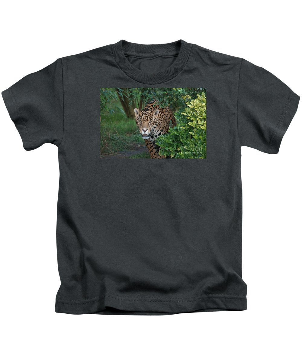 Animal Kids T-Shirt featuring the photograph Male Leopard by Franco De Luca Calce Wildlife Photographer