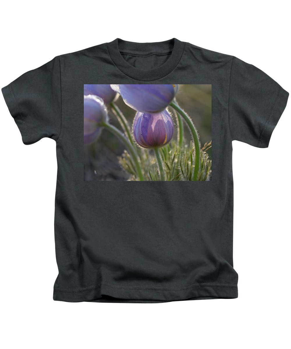 Pasque Kids T-Shirt featuring the photograph Pasque Shadows by Heather Coen