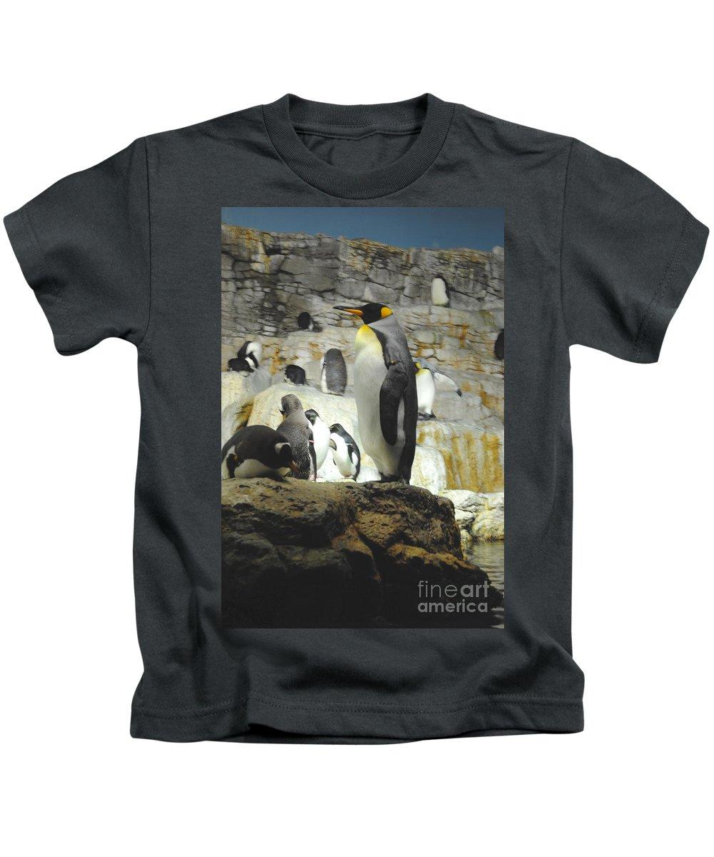 Penguin Kids T-Shirt featuring the photograph Penguin by Jost Houk