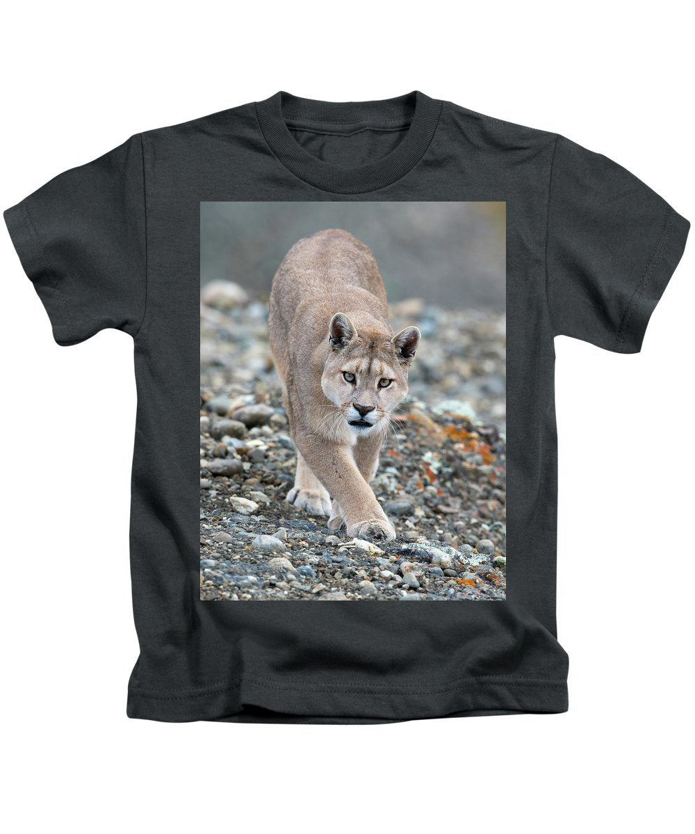 Puma Kids T-Shirt featuring the photograph Puma Walk by Max Waugh