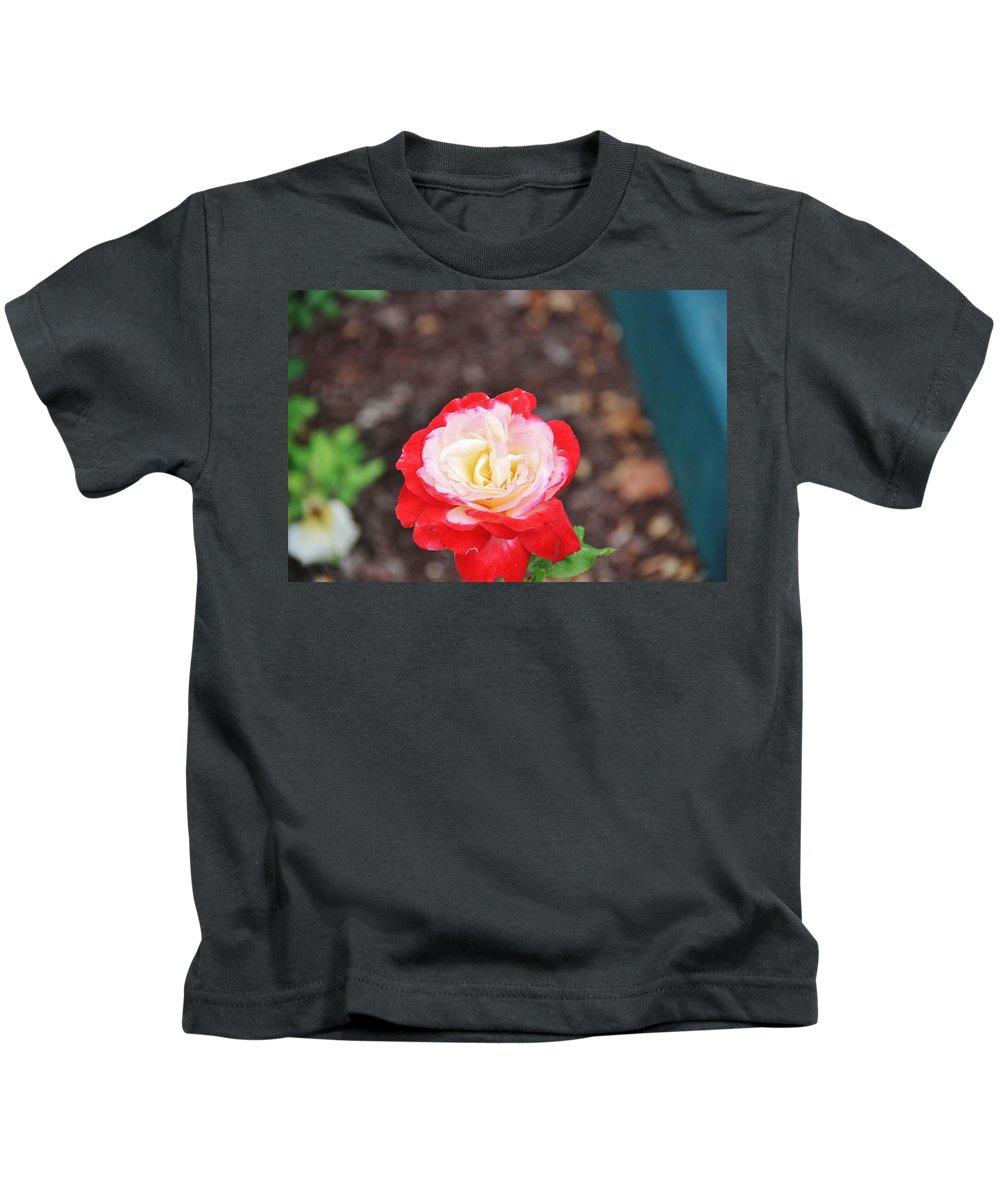 Landscape Kids T-Shirt featuring the photograph Red With Pink White Yellow Centered Rose by Carroll Francis