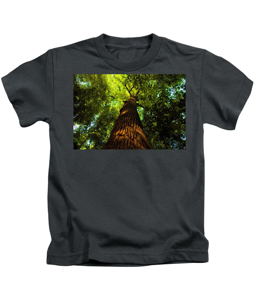 Redwood Forest Kids T-Shirt featuring the painting Redwoods by David Lee Thompson