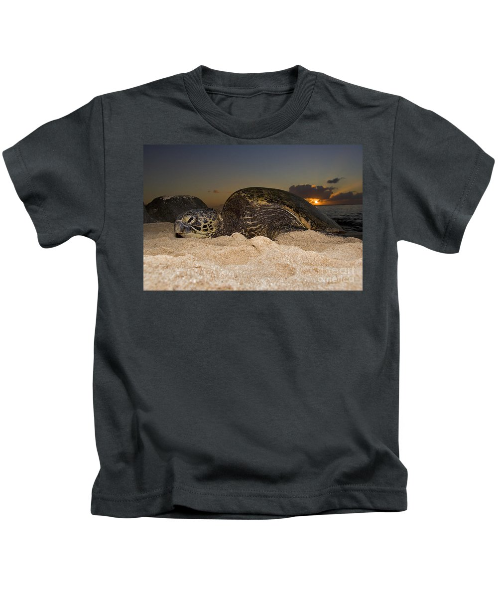 Ancient Kids T-Shirt featuring the photograph Resting Green Sea Turtle by Dave Fleetham - Printscapes