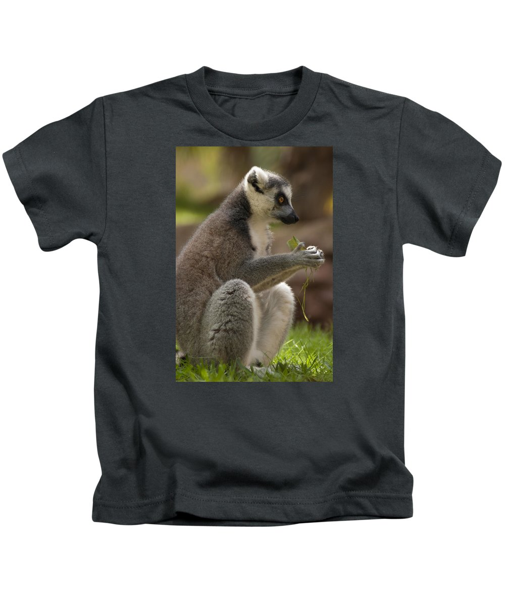 Adult Kids T-Shirt featuring the photograph Ring-tailed Lemur Holding A Clump Of Grass by Jill Mitchell