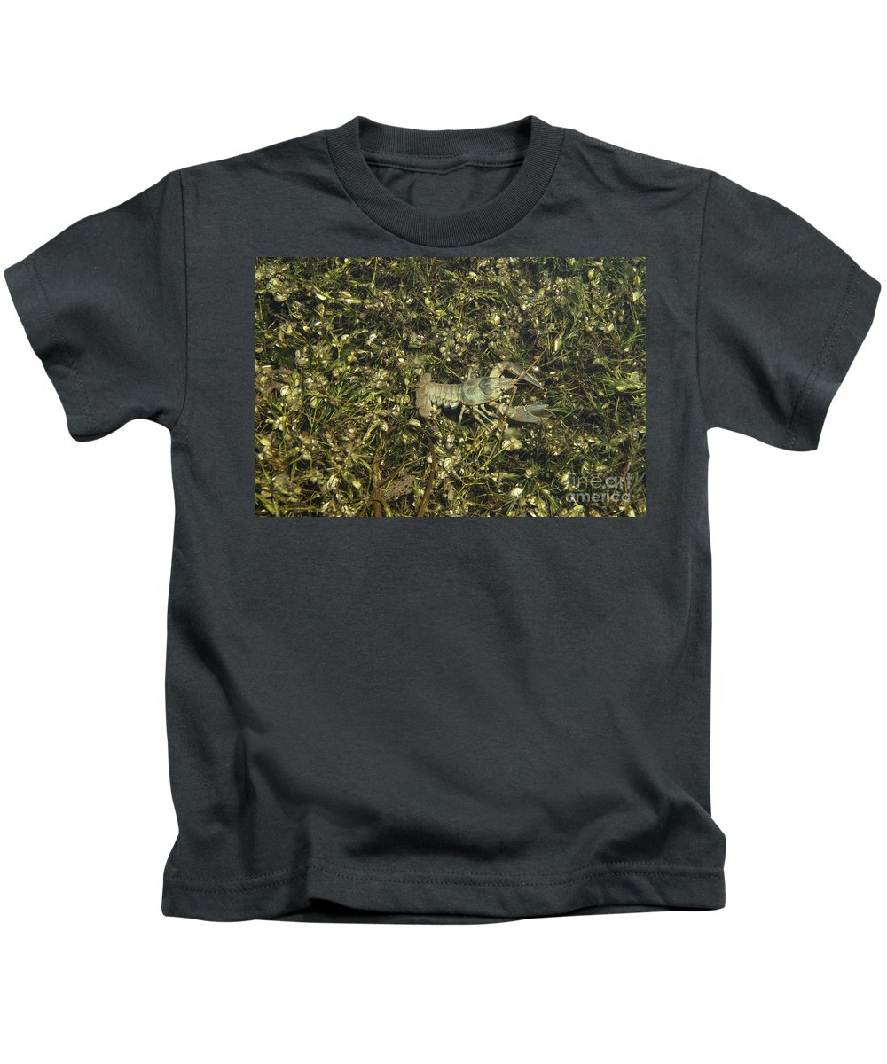 Fauna Kids T-Shirt featuring the photograph Rusty Crayfish At Night by Ted Kinsman