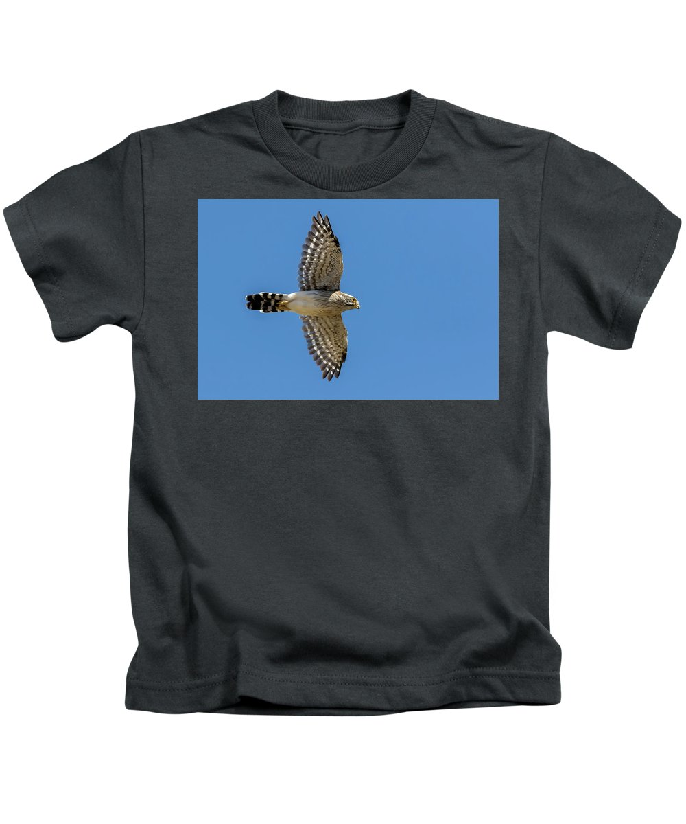 Spot-winged Falconet Kids T-Shirt featuring the photograph Spot-winged Falconet In Flight by Pablo Rodriguez Merkel
