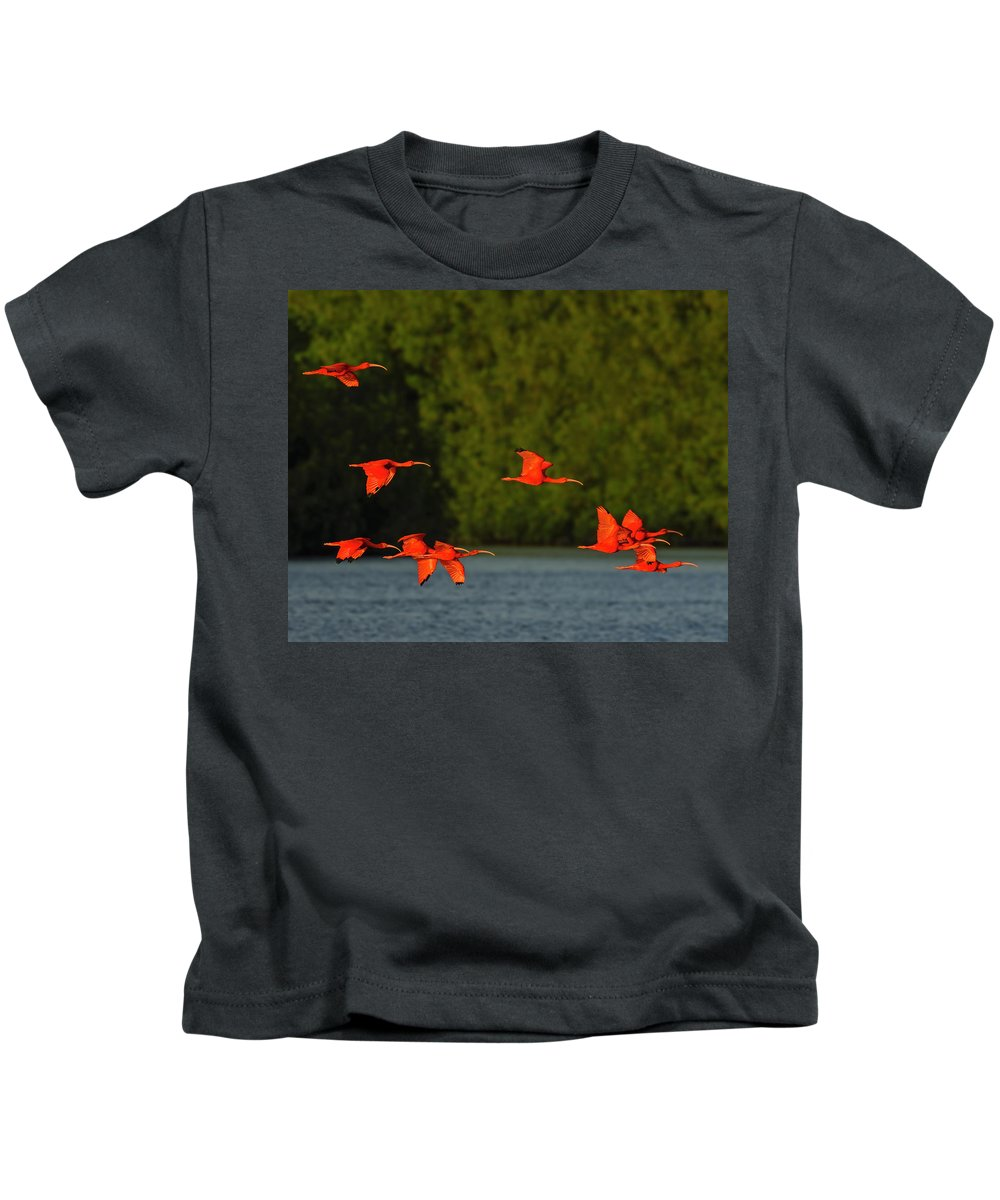 Scarlet Ibis Kids T-Shirt featuring the photograph Stop Lights by Tony Beck