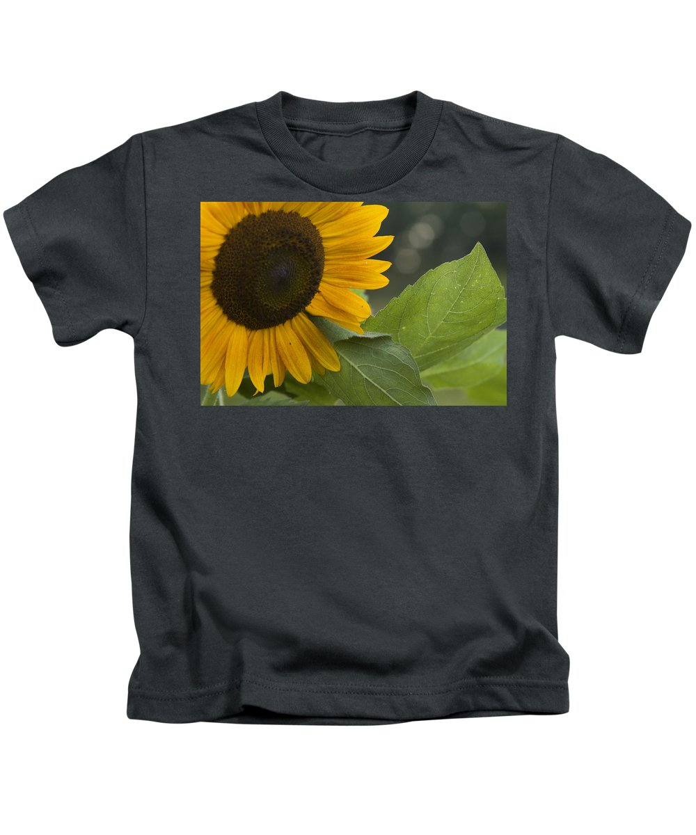 Flower Nature Farm Yellow Bright Sunflower Green Leaf Leaves Close Garden Organic Happy Kids T-Shirt featuring the photograph Sunflower by Andrei Shliakhau
