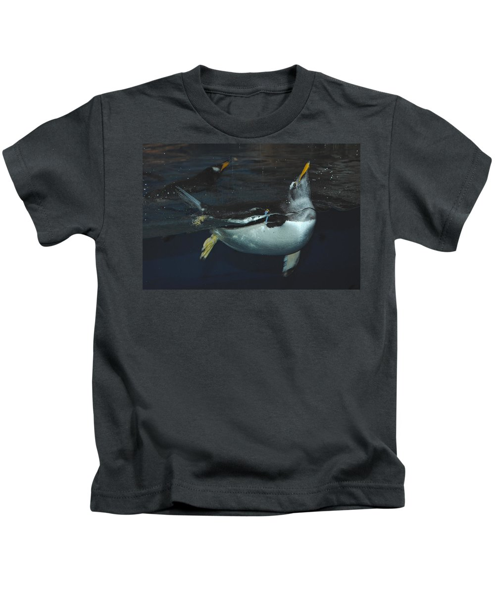 Pengiun Kids T-Shirt featuring the photograph The Swim by Jost Houk