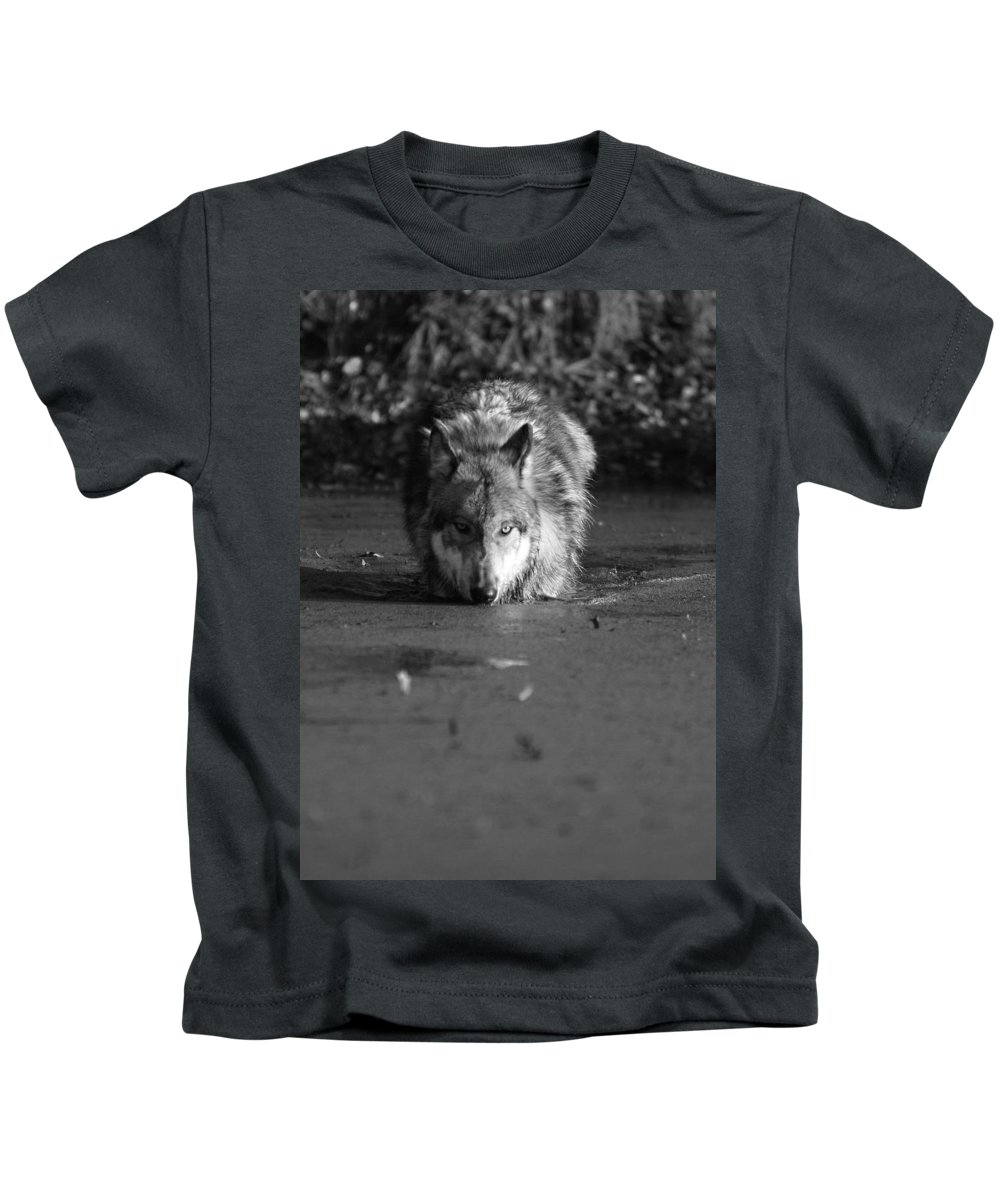 Wolf Wolves Lupine Canis Lupis Animal Wildlife Photograph Photography Kids T-Shirt featuring the photograph Water Wolf I by Shari Jardina