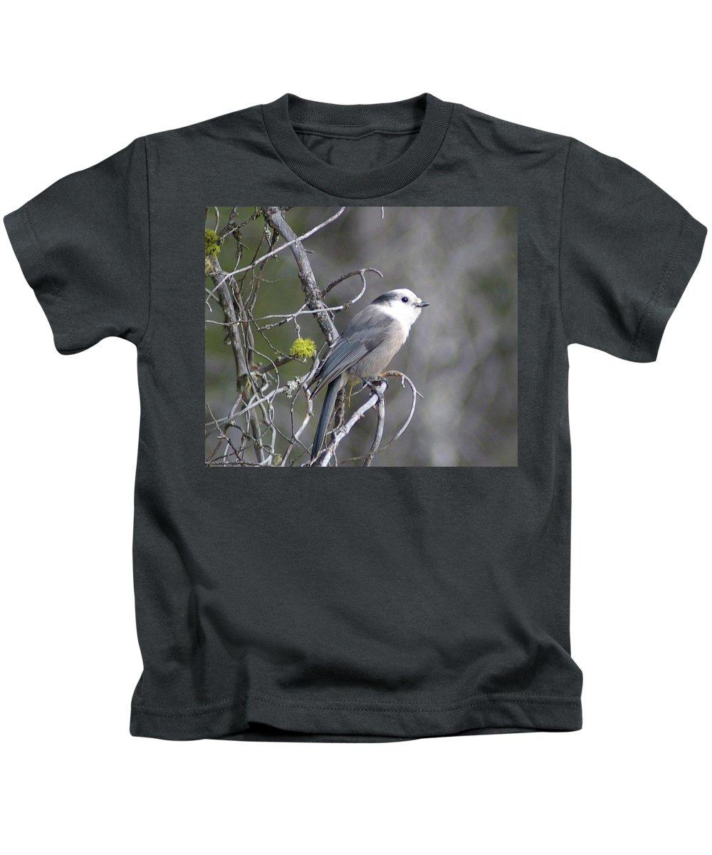 Birds Kids T-Shirt featuring the photograph Winter Bird by Jeff Swan