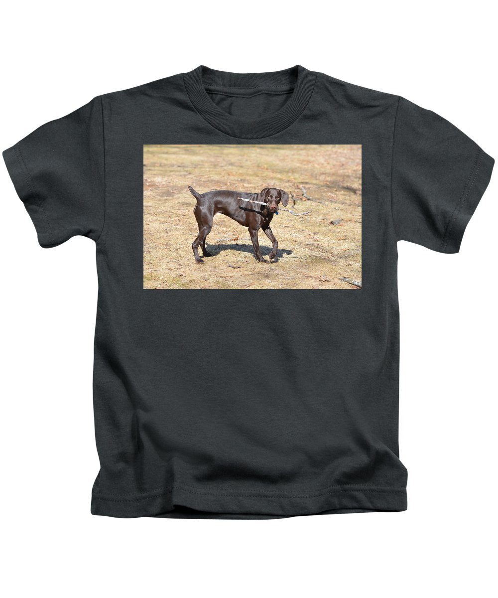 German Shorthaired Pointer Kids T-Shirt featuring the photograph Work And Play by Tammy Mutka