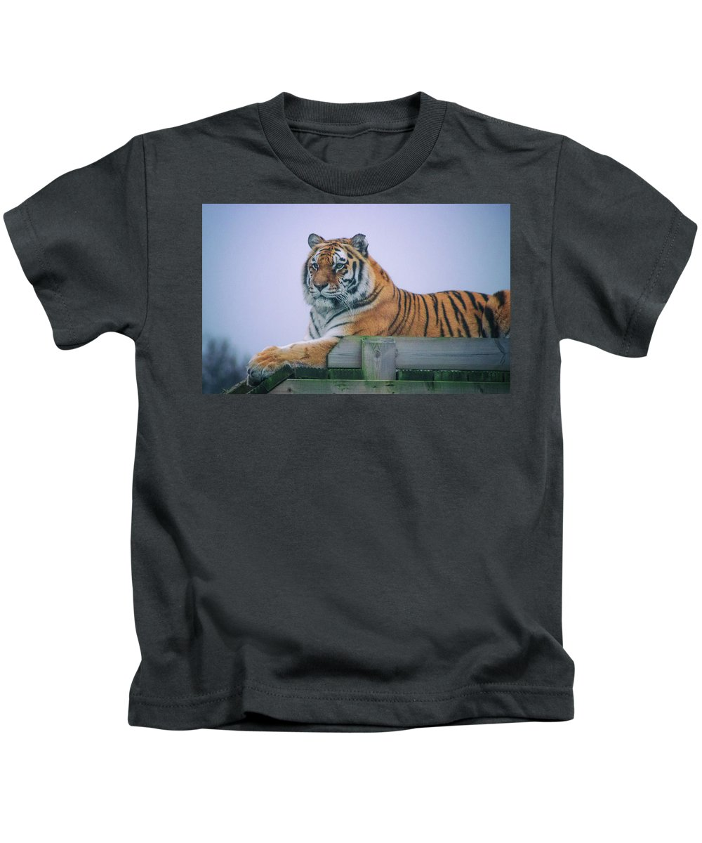 Tiger Kids T-Shirt featuring the photograph Amur Tiger by Martin Newman
