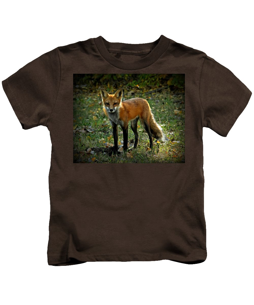 Fox Kids T-Shirt featuring the photograph The Fox by Stacy Egnor