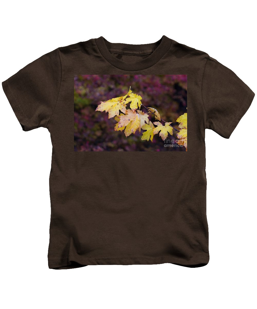 Maple Kids T-Shirt featuring the photograph Autumn Contrast by Mike Dawson