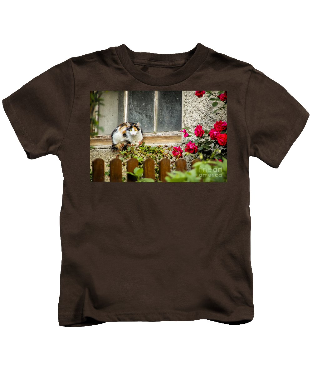 Slovenia Kids T-Shirt featuring the photograph Cat On A Sill by Timothy Hacker