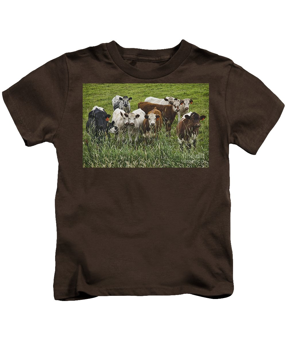 Cow Kids T-Shirt featuring the photograph Curious Cows by Priscilla Burgers