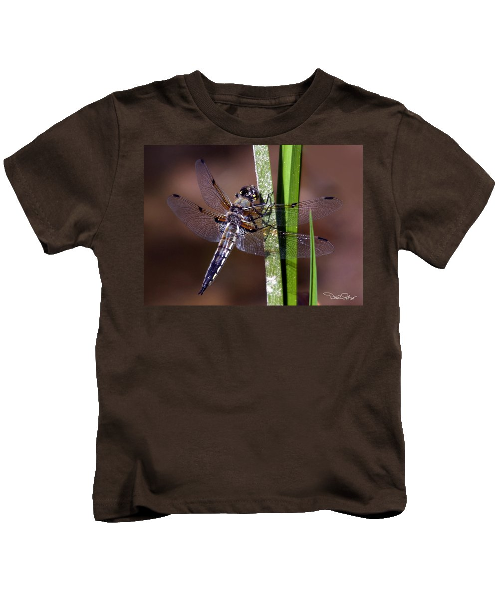Four-spotted Skimmer Kids T-Shirt featuring the photograph Four-spotted Skimmer by David Salter