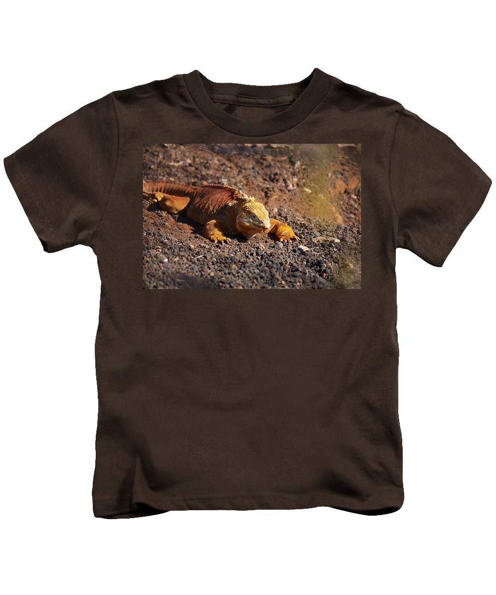Galapagos Kids T-Shirt featuring the photograph Galapagos Land Iguana by Allan Morrison