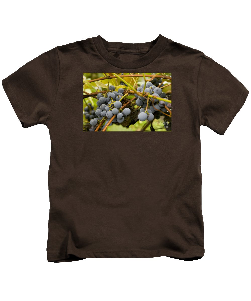 Vineyard Kids T-Shirt featuring the photograph Grape Work by Thomas Levine