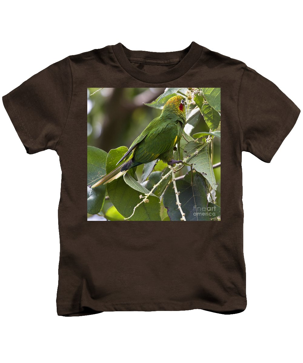 Parrot Kids T-Shirt featuring the photograph Hoffman's Conure by Heiko Koehrer-Wagner