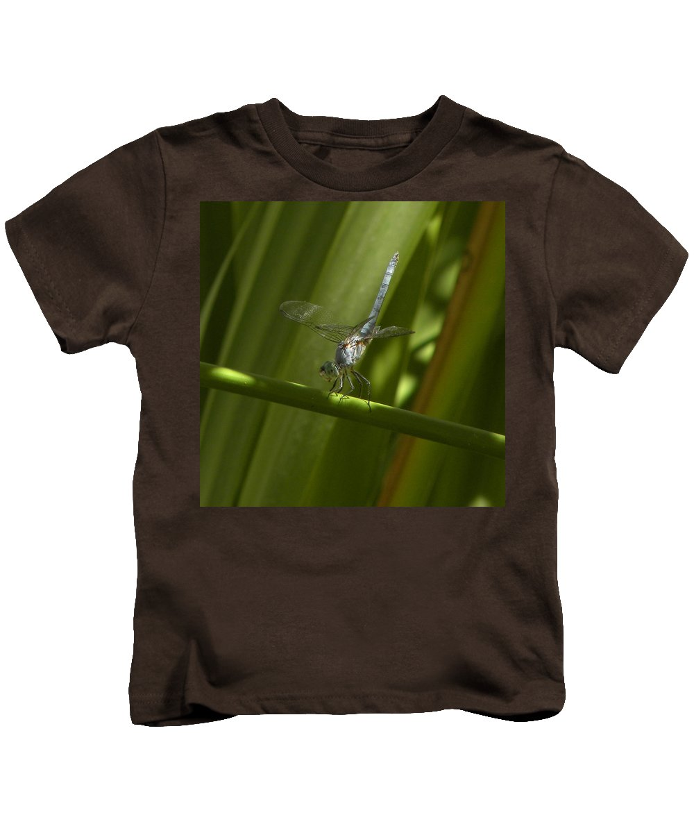 Blue Dragon Fly Kids T-Shirt featuring the photograph Hold On by John Wilson