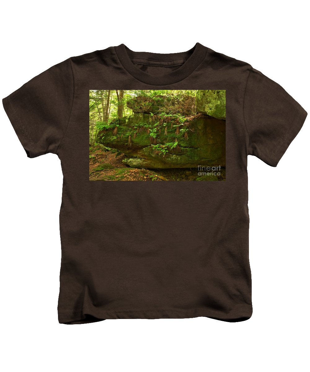 Kildoo Trail Kids T-Shirt featuring the photograph Kildoo Trail Stoned Turtle by Adam Jewell