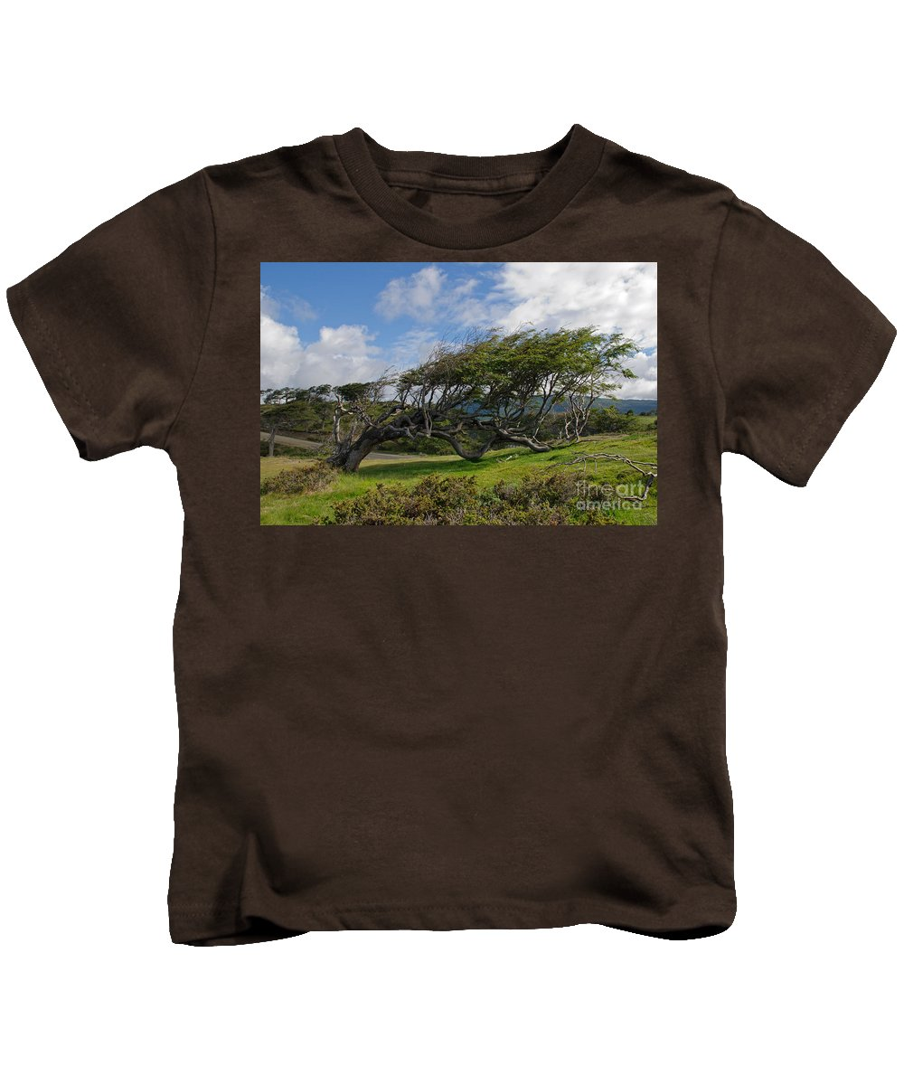 Sky Kids T-Shirt featuring the photograph Wind-bent Tree In Tierra Del Fuego Patagonia by Ralf Broskvar