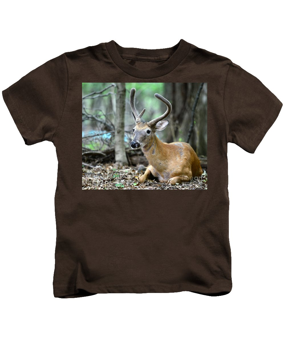 Velvet Buck At Rest Kids T-Shirt featuring the photograph Young Buck At Rest by Paul Ward