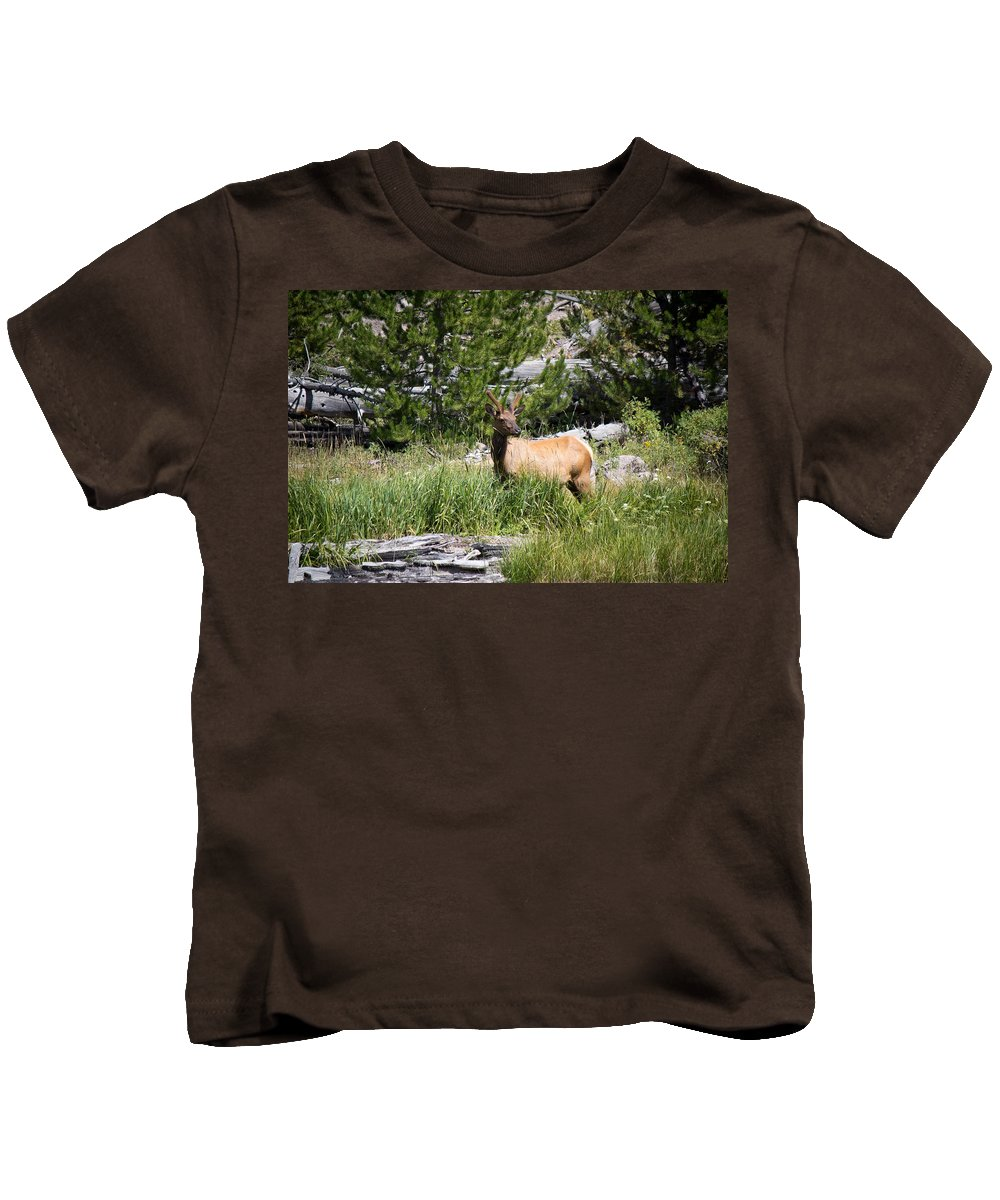 Elk Kids T-Shirt featuring the photograph Young Bull Elk - Yellowstone National Park - Wyoming by Diane Mintle