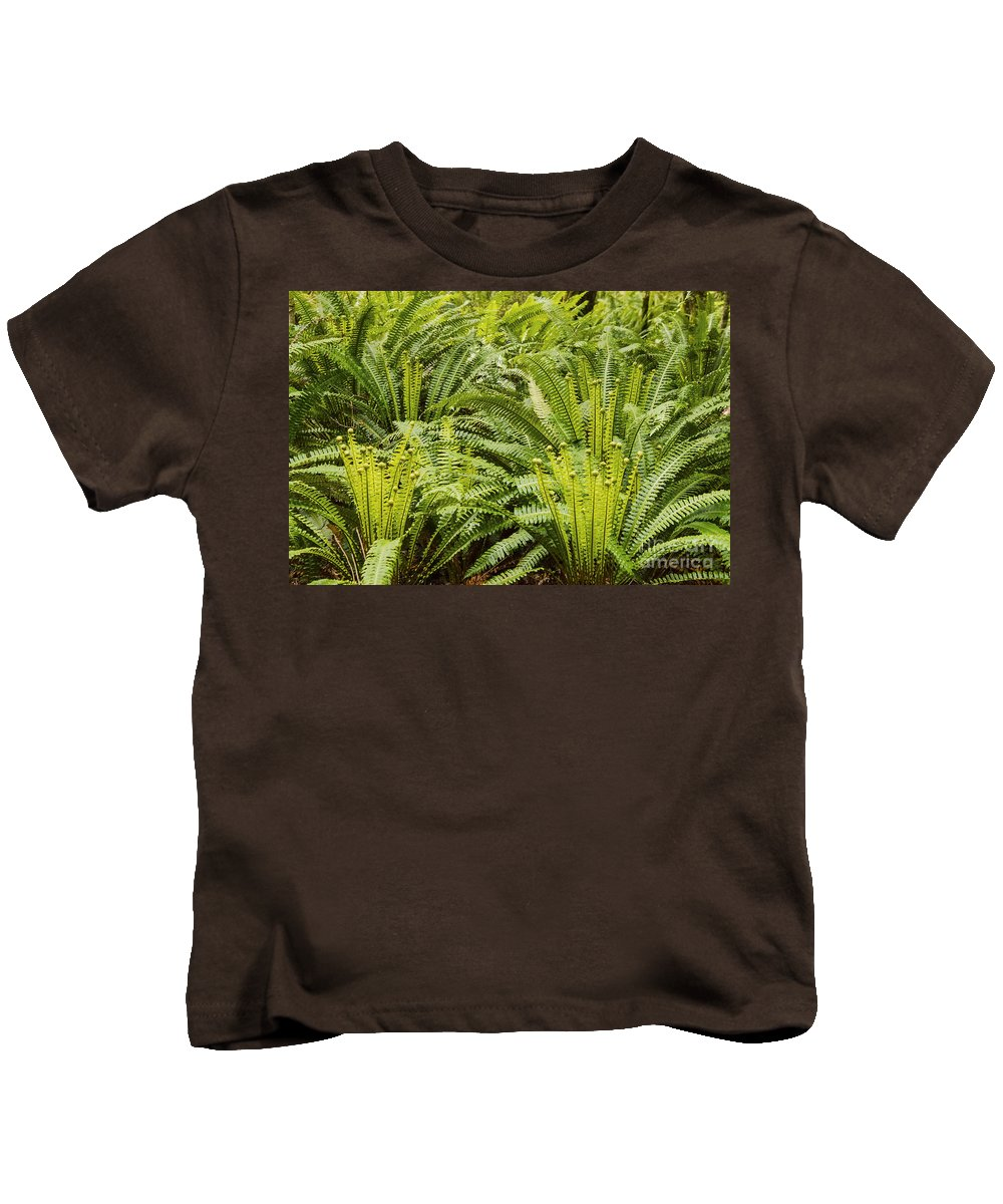 Lake Te Anau New Zealand Fiddlehead Fern Ferns Fiddleheads Branch Branches Kids T-Shirt featuring the photograph Young Fiddleheads by Bob Phillips