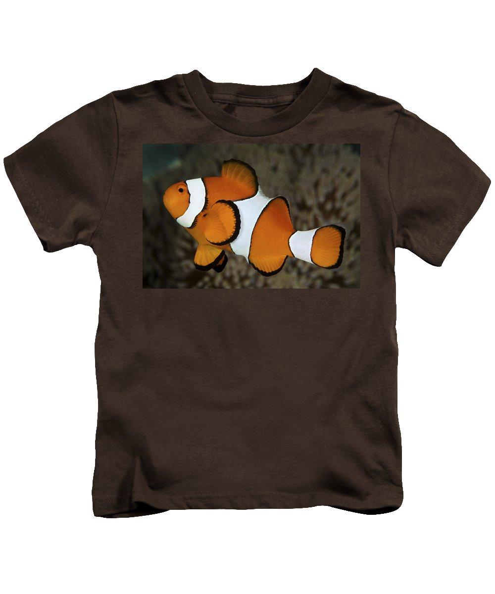 Amphiprion Kids T-Shirt featuring the photograph False Clownfish by Steve Rosenberg - Printscapes