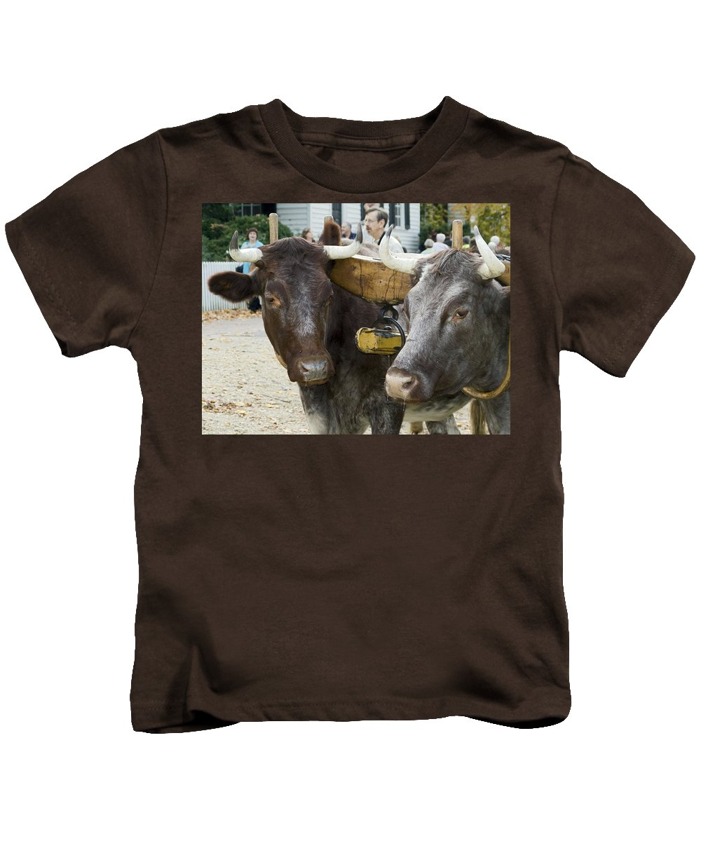 2 Oxen Walk Duke Of Glouster Street Kids T-Shirt featuring the photograph Oxen Pair by Sally Weigand