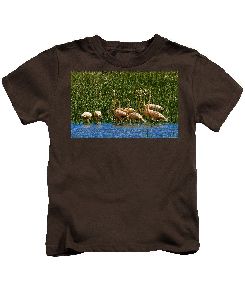 Flamingos Kids T-Shirt featuring the photograph Flamingo Family by Galeria Trompiz