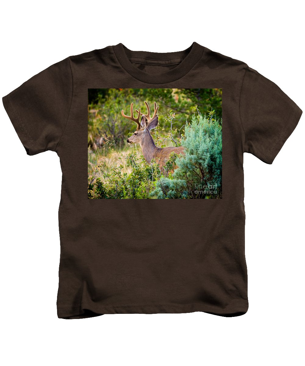 Mule Deer Kids T-Shirt featuring the photograph Mule Deer by Matt Suess
