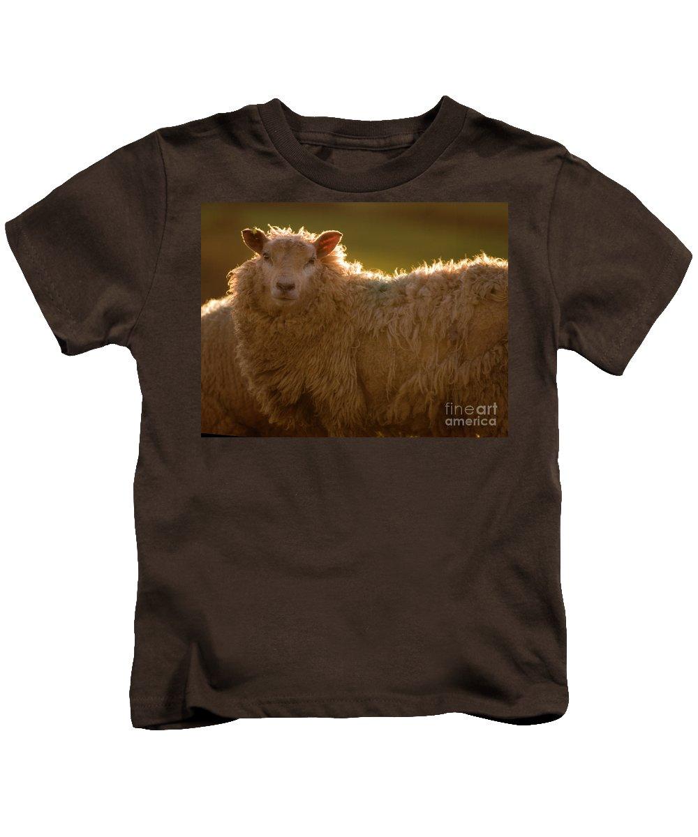 Lamb Kids T-Shirt featuring the photograph Welsh Lamb In Sunny Sauce by Angel Ciesniarska