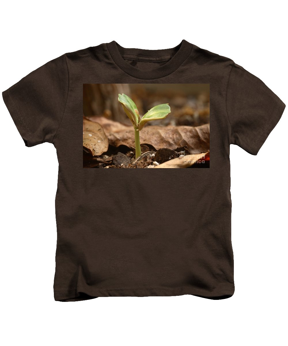 Plant Kids T-Shirt featuring the photograph Coffee Seedling by Ted Kinsman