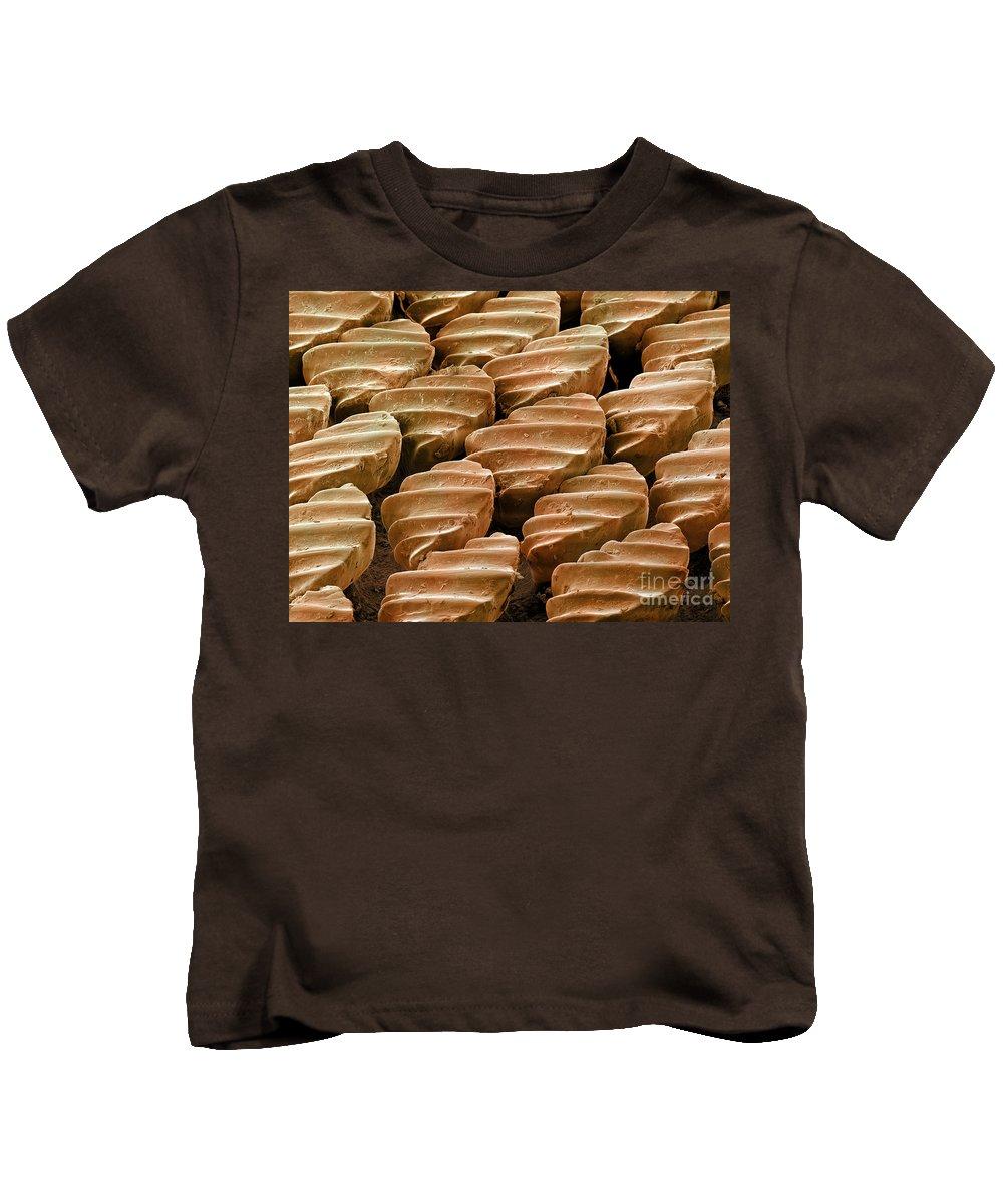 Sandbar Kids T-Shirt featuring the photograph Sandbar Shark Skin, Sem by Ted Kinsman